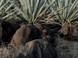 tequila-santanera-batch-piedra